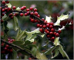 Traditional Holiday Herbs