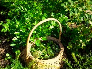 Local Herbalism: Don't Forget the Dandelions!