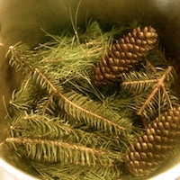 Thumbnail image for Winter Medicine: Evergreen Syrup